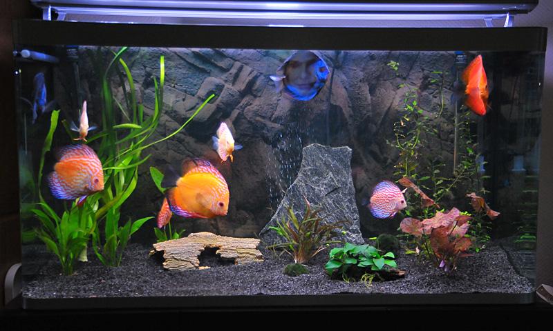 nun mal was grunds tzliches aquarienfotografie diskussionsforum f r diskusliebhaber. Black Bedroom Furniture Sets. Home Design Ideas